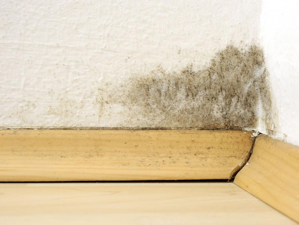 Odstranění plísní na zdech – jak na to s unikátním nátěrem LSG