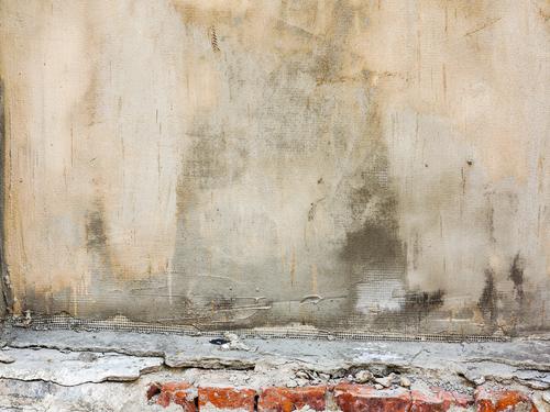 Plísně na stěně a cena za jejich odstranění