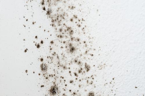 Jak chránit byt před vznikem plísní? Nátěr LSG Praha