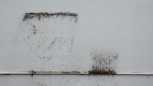 Pokud se vám na zdi objeví plíseň, neignorujte ji. Kontaktuje protiplísňovou firmu Praha